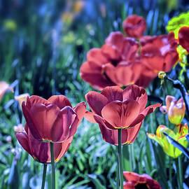 Spring Garden by Susan Warren