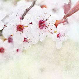 Spring Glory 1 by Debbie Portwood