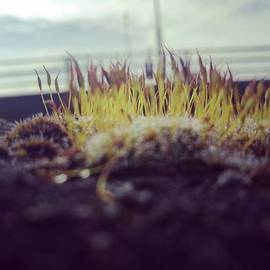 John S - Spring Growth. #bridge #lucysmill