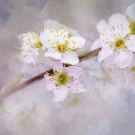Terry Davis - Spring in Blossom