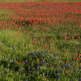 Spring In Central Texas by Frank Madia