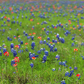 Bob Marquis - Spring In Texas