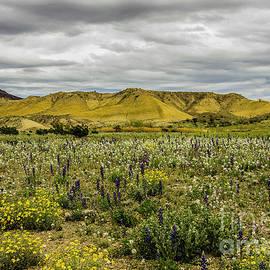 Bob Marquis - Spring In The Desert