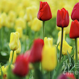 Nick Boren - Spring Is Coming