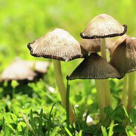 Yarinka Morozova - Spring mushrooms