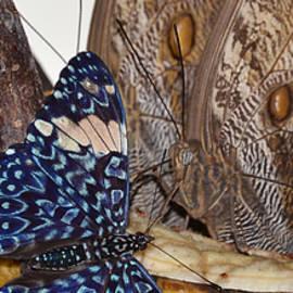 Gustave Kurz - Spring Nectar