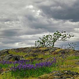 Inge Riis McDonald - Spring on Shack Island