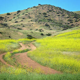 Lynn Bauer - Spring on the Chumash Trail