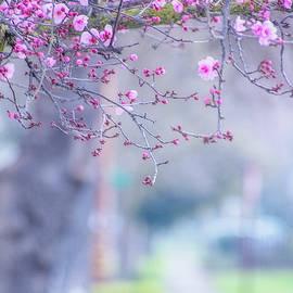 Terry Davis - Spring on Vine Street