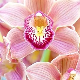 Spring Orchids by Jacky Parker