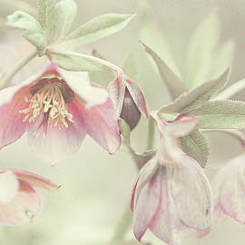 Spring Pastels by Jenny Rainbow