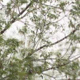 Spring Rain by Itsonlythemoon