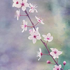 Spring Splendor by Linda Lees