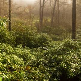 Matt Tilghman - Spring Sunrise over Carolina Rhododendron Forest