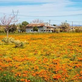 Spring Wildflower Farm by Lynn Bauer