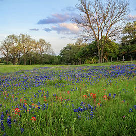 Spring's Glory in the Hill Country by Lynn Bauer