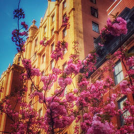 Springtime in New York - Pretty in Pink