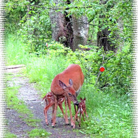 Patricia Keller - Springtime Moment - Whitetail Deer And Fawns