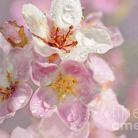 Springtime Pink by Kaye Menner by Kaye Menner
