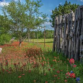 Lynn Bauer - Springtime Wildflower Fence