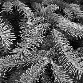 Holly Ross - Spruce in black and white