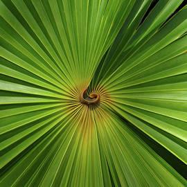 Square Palmetto Leaf by Rosalie Scanlon