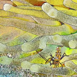 Squat Anemone Shrimp Cartoon