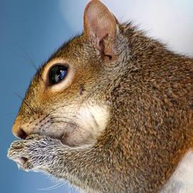 Delphine Ross - Squirrel 1