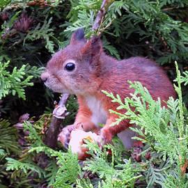 Johanna Hurmerinta - Squirrel 3