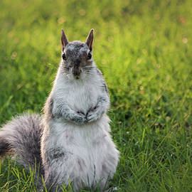 Squirrel Female Standing Up by Cristina Stefan