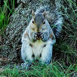 Eileen Brymer - Squirrel Friend