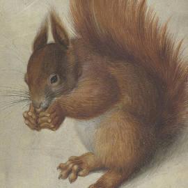 Hans Hoffmann - Squirrel