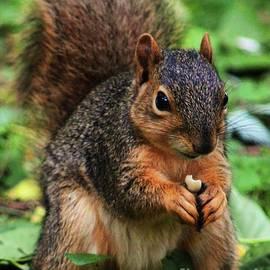 Squirrel Portrait  Vision # 5 by Poet's Eye