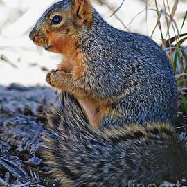 Squirrel  by Rebecca Langen