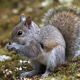 Squirrel seed