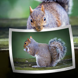 Squirrely Critique by Brian Wallace
