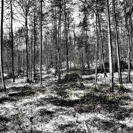 St Lawrence's Wood, Hartshill Hayes