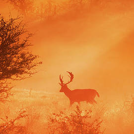 Stag on Stage - Roeselien Raimond