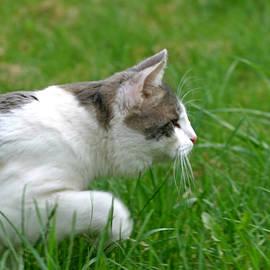 Dagmar Batyahav - Stalking Cat