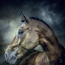 Brian Tarr - Stallion