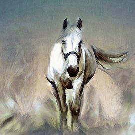 Stallion by Pennie McCracken