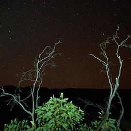 Star Light Star Bright by Paul Svensen
