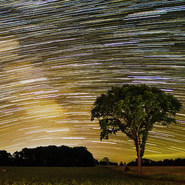 Star Trail over Lone Elm Tree by Dustin Goodspeed
