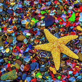 Starfish Among Sea Glass - Garry Gay