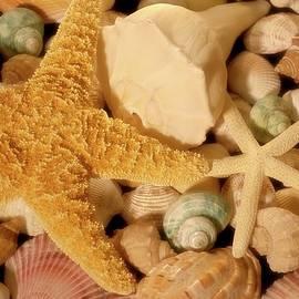 Starfish And Seashells by Angie Tirado
