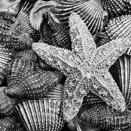Starfish And Shells Black And White by Sharon McConnell