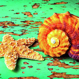 Garry Gay - Starfish And Snail Shell