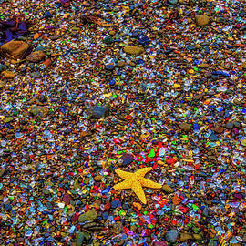 Starfish On Glass Beach - Garry Gay