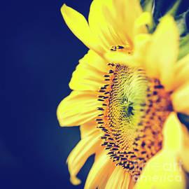 Starflower by Sharon Mau