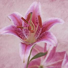 Sandy Keeton - Stargazer Lily